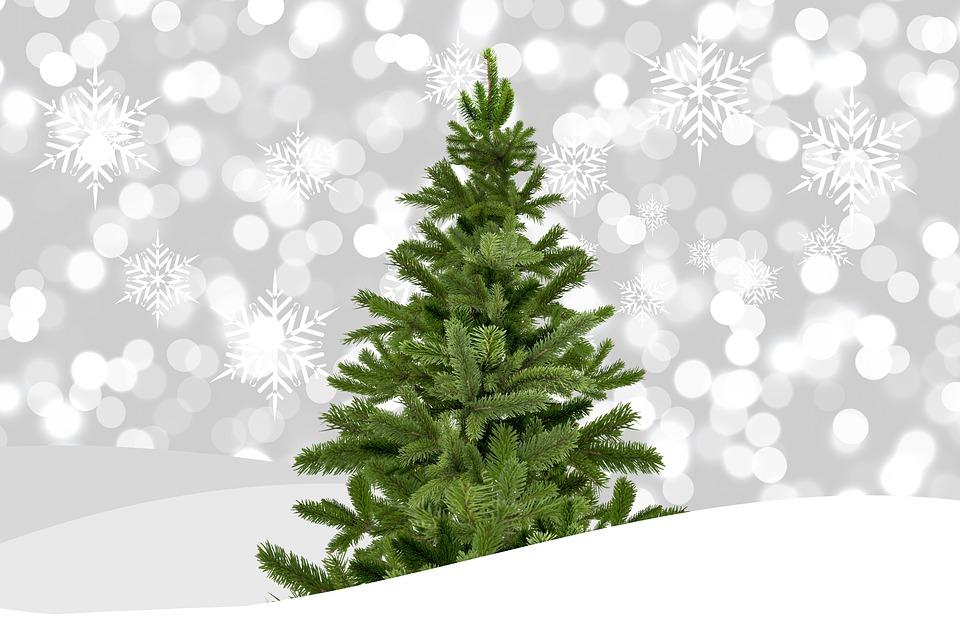 西畠清順の世界一のクリスマスツリーの批判とは?プロジェクトでブリの解体?